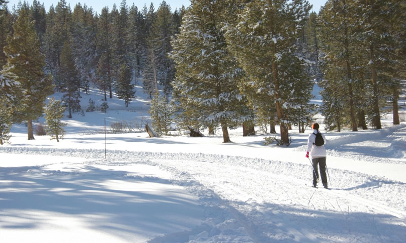 Cross Country Skiing near Lake Tahoe