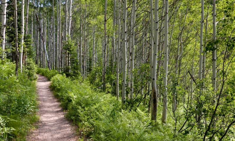 McCall Idaho Hiking Trails